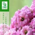 陕西艺林园丁园林