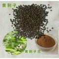 热销黄荆子提取物   1公斤起订   UV检测 多种提取规格
