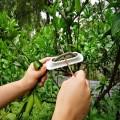 果树拉枝器解决目前果树枝压枝过程出现的效率低