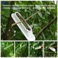 果树拉枝定型器有效改变枝条生长目的