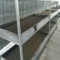 黑水虻养殖技术