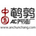 上海市鵪鶉苗多少錢一只?