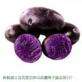 贵州黑土豆批发