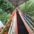 河北景區云梯魔毯一米多錢 滑雪場魔毯代步機