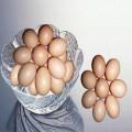 正宗罗曼粉蛋鸡