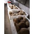 一只種刺猬養殖成本和利潤 江西刺猬養殖場