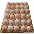 新品种大午金凤蛋鸡哪里买