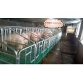 青岛母猪定位栏复合限位栏70宽带钢板母猪食槽