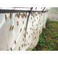 全新料的蚂蚱网全新料的纱网直销的加厚加宽的蝗虫网