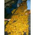 黄桃罐头食品不锈钢网带式输送机厂家定制