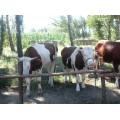 营城子买牛接待处