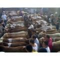 吉林黄牛交易大市场