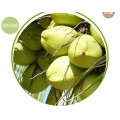 泰國椰子進口清關手續流程