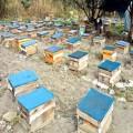 绵阳土蜂蜜销售电话