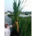 人工浮岛植物 景观效果人工生态浮床 生态浮床 浮岛植物