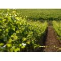 节水灌溉技术自动灌溉系统哪家好还便宜,选择耐特菲姆
