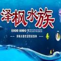 重庆日本锦鲤在哪里买